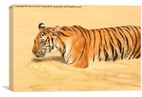 Tiger Walking in the Water, Canvas Print