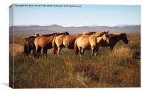 Mongolian Working Horses in the Gobi Desert, Canvas Print
