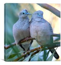 Pair of Peaceful Doves, Canvas Print