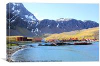 South Georgia in the Southern Atlantic, Canvas Print