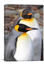 King Penguins, Canvas Print