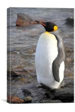 King Penguin, Canvas Print