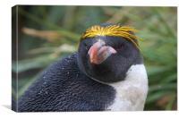 Macaroni Penguin Portrait, Canvas Print
