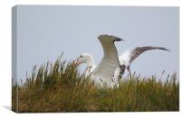 Wandering Albatross Catching a Thermal, Canvas Print