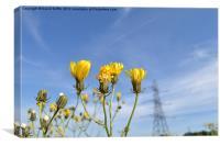 Pretty Yellow Flowers, Canvas Print