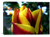Vibrant Spring Tulip, Canvas Print