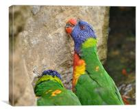 Beak Sharpening Parrotts, Canvas Print