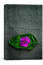 Wrinkled Pink, Canvas Print