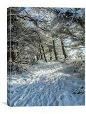 Snowy Woodland Scene, Canvas Print