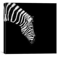 Zebra Mono, Canvas Print