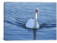 Swimming Swan Lake, Canvas Print
