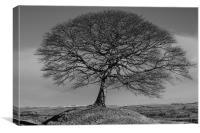 Solitary Tree Mono, Canvas Print