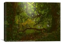 Forest Light, Canvas Print