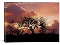 Devon Sunset, Canvas Print