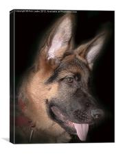 Paco the Shepherd, Canvas Print