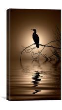 Cormorant sunrise, Canvas Print