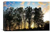 Sunset through the trees, Canvas Print