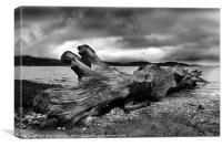 Driftwood, Canvas Print