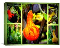 Collage of Gourds, Canvas Print