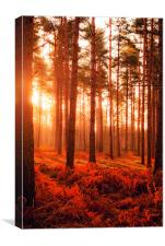 Wokefield Common, West Berkshire, Canvas Print