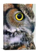 Owl, Bird of Prey, Canvas Print