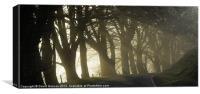 Woodland Rays, Canvas Print