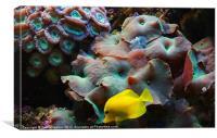 Underwater Home, Canvas Print