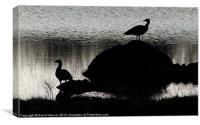 Greylag Goose Guard, Canvas Print