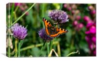 Butterfly on Chives, Canvas Print