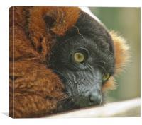 Watchful Lemur, Canvas Print