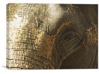Elephant Eye, Canvas Print