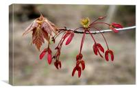 more red leaves, Canvas Print