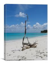 Proud Driftwood, Canvas Print