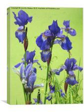 Blue Irises, Canvas Print
