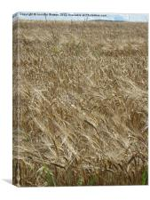Field of Barley, Canvas Print