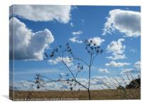 Seeds and Sky, Canvas Print
