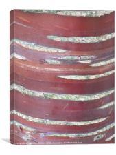 Cherry Tree Bark, Canvas Print