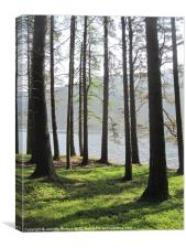 Loch Muick through the Trees, Canvas Print