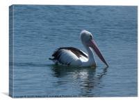 Pelican, Canvas Print