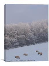 Winter Grazing 2, Canvas Print