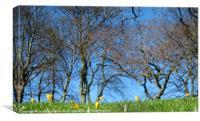 Springtime, Canvas Print