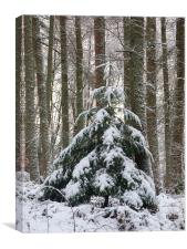 Oh Christmas Tree, Canvas Print