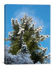 Winter Trees, Canvas Print