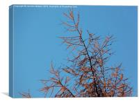 Larch top, Canvas Print