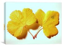 Yellow Leaves, Canvas Print