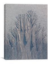Sand Tree Copse, Canvas Print