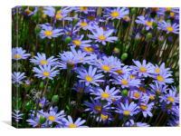 Blue Daisies, Canvas Print