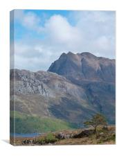 Slioch and the pine tree, Canvas Print