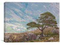 The Lonesome Pine, Canvas Print
