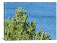 Pine tree by the sea, Canvas Print